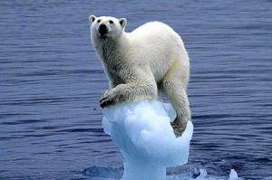 Polar Bear by Carla Lombardo Ehrlich